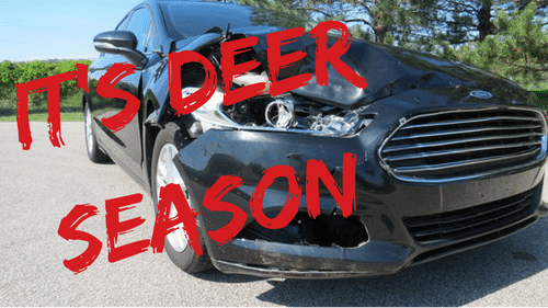 Deer Collision